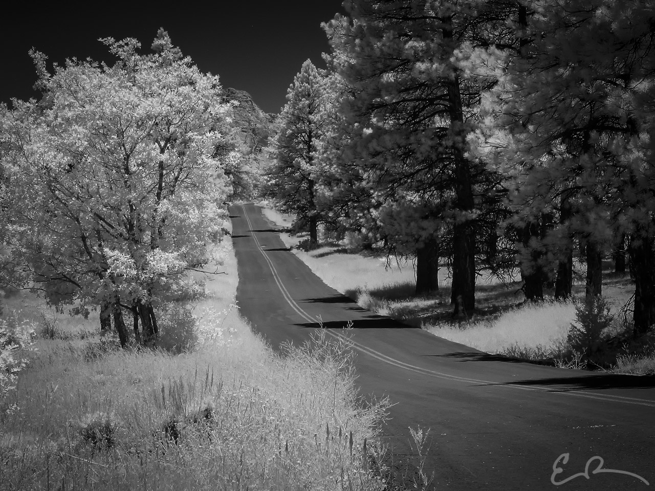 Through the Woods Infrared