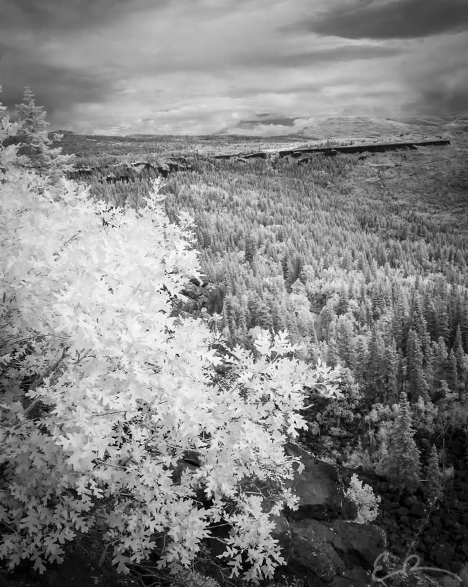 Looking North in Infrared