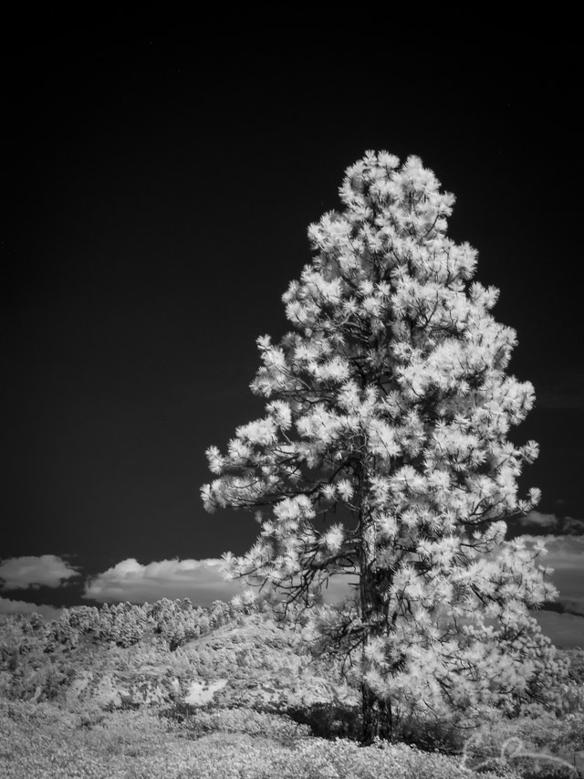 Old Guard in Infrared