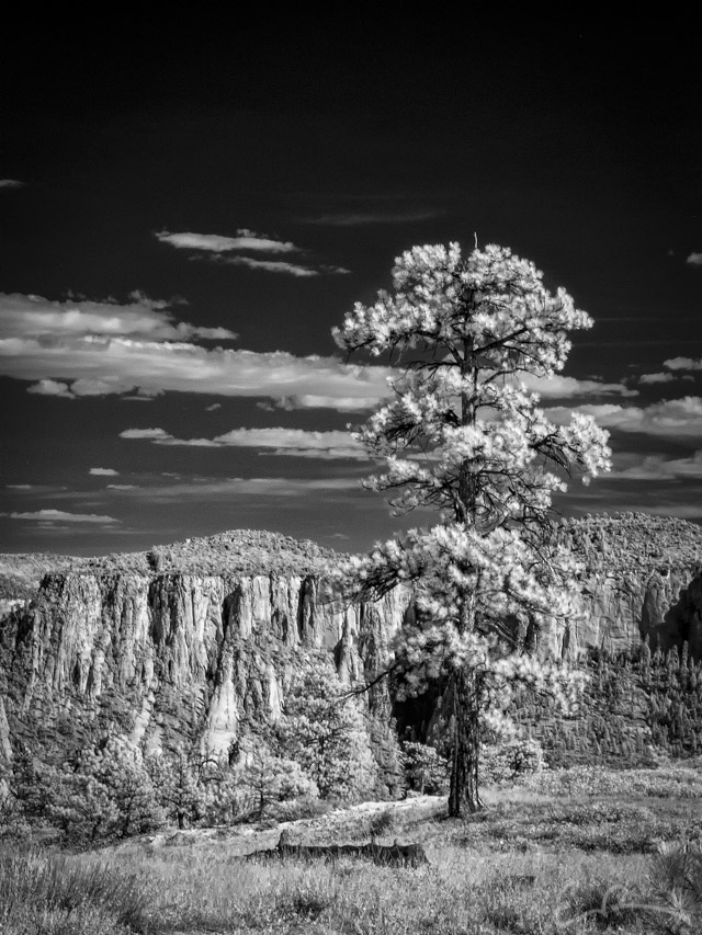 Old Guard in Infrared II