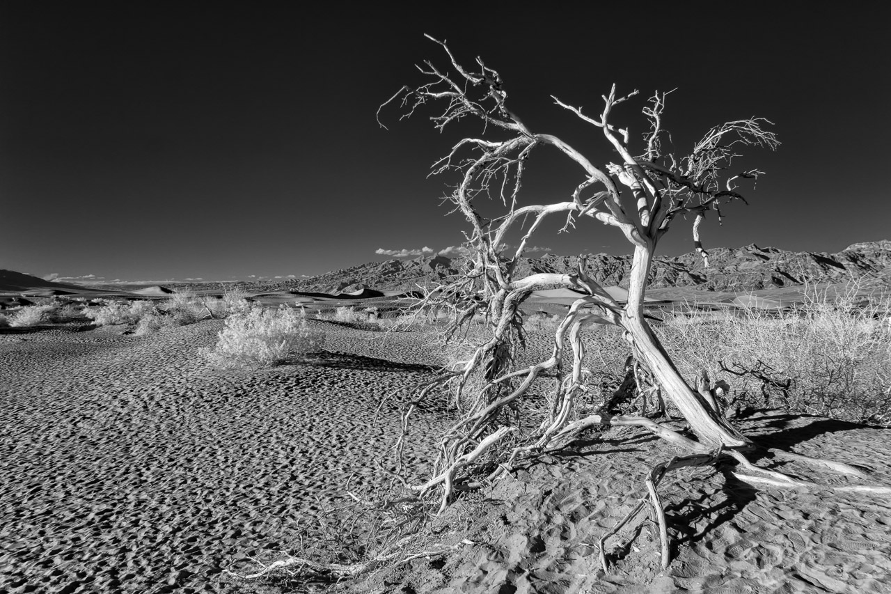Ghosts of the Mesquite Flat Sand Dunes