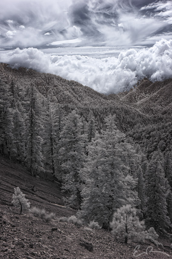 Dawson Saddle View