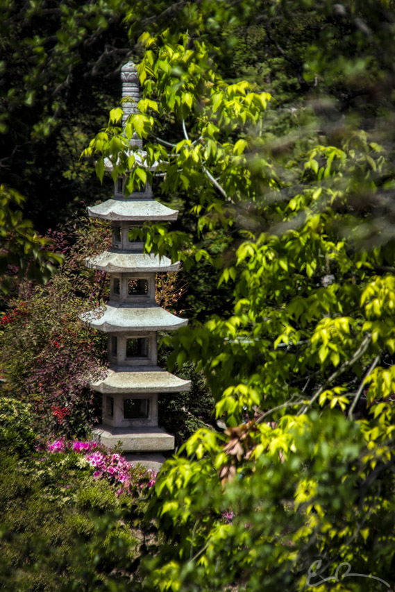 Huntington Japanese Garden