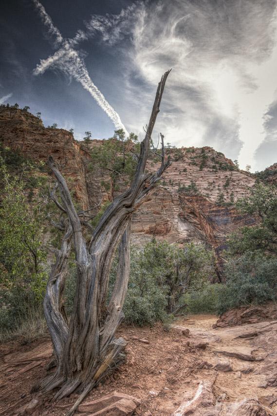 Along Canyon Overlook II