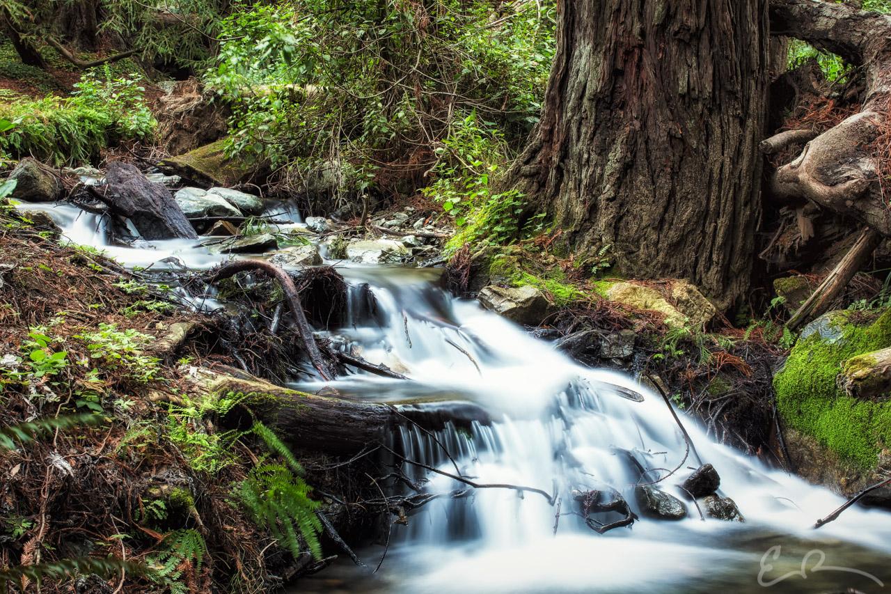 McWay Creek I