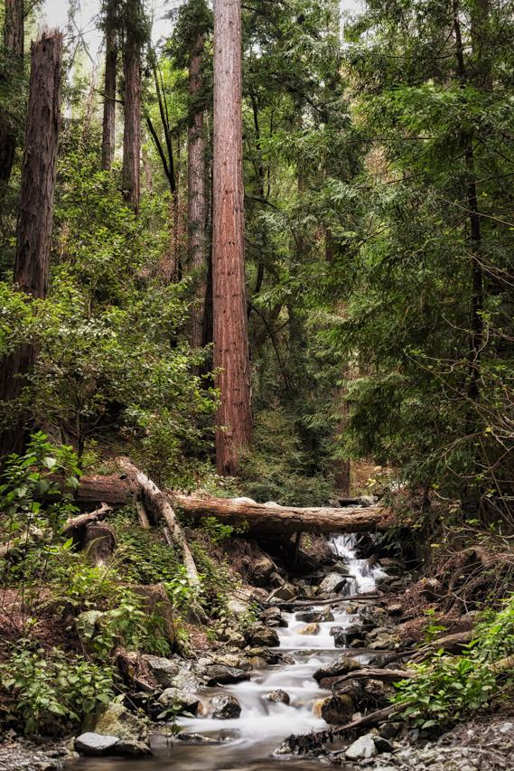 McWay Creek II