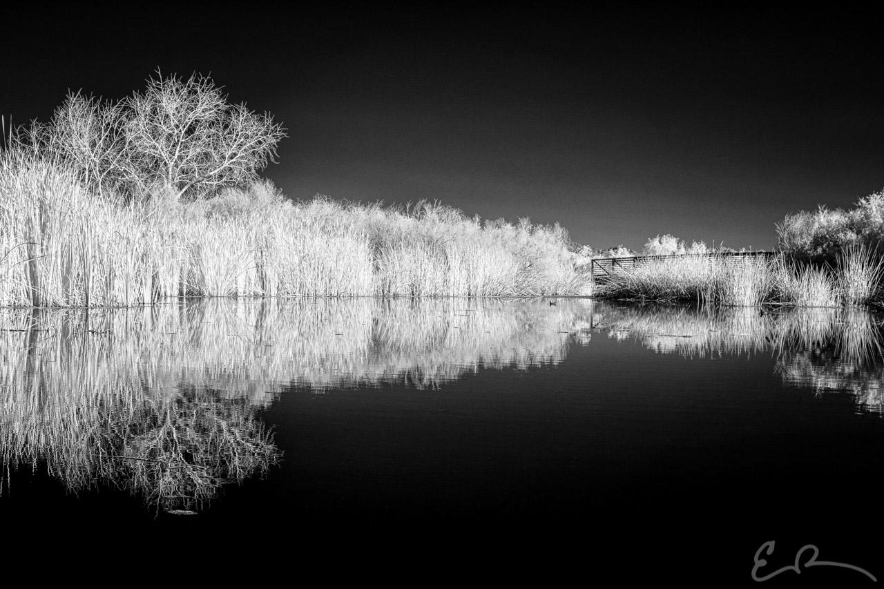 Wetlands Lower Pond