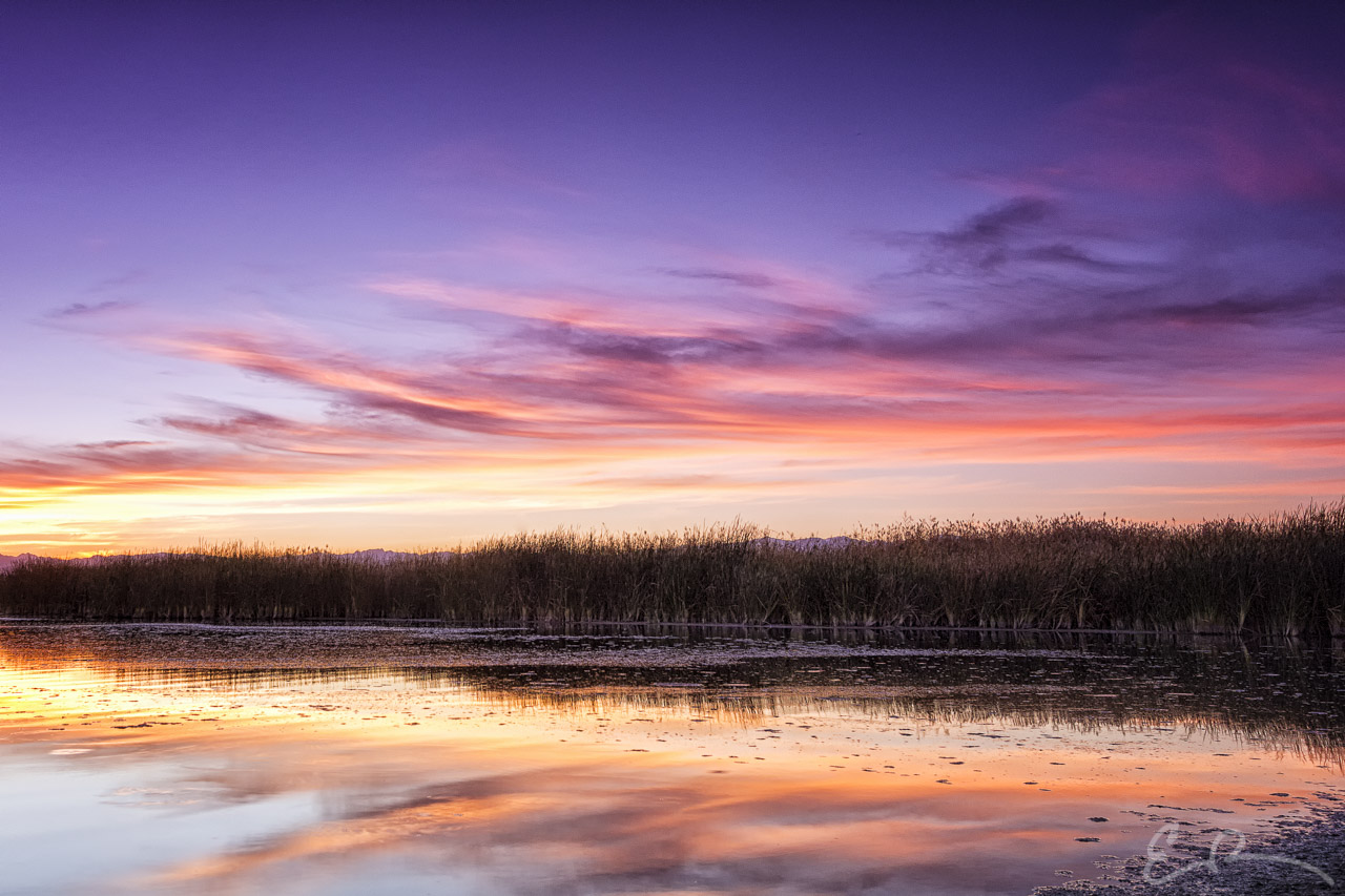 Sunset Over the Reeds