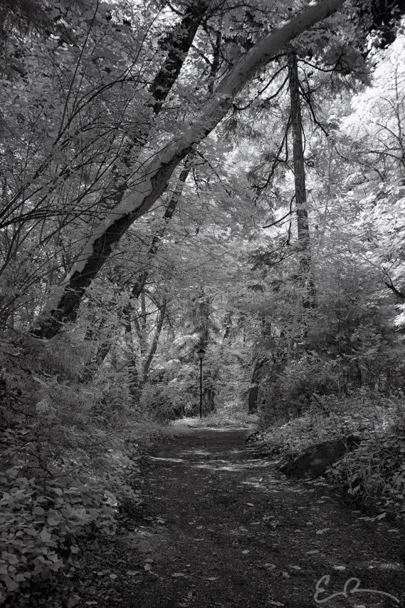 Lithia Park II