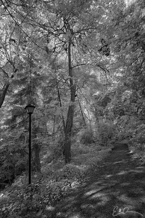 Lithia Park III