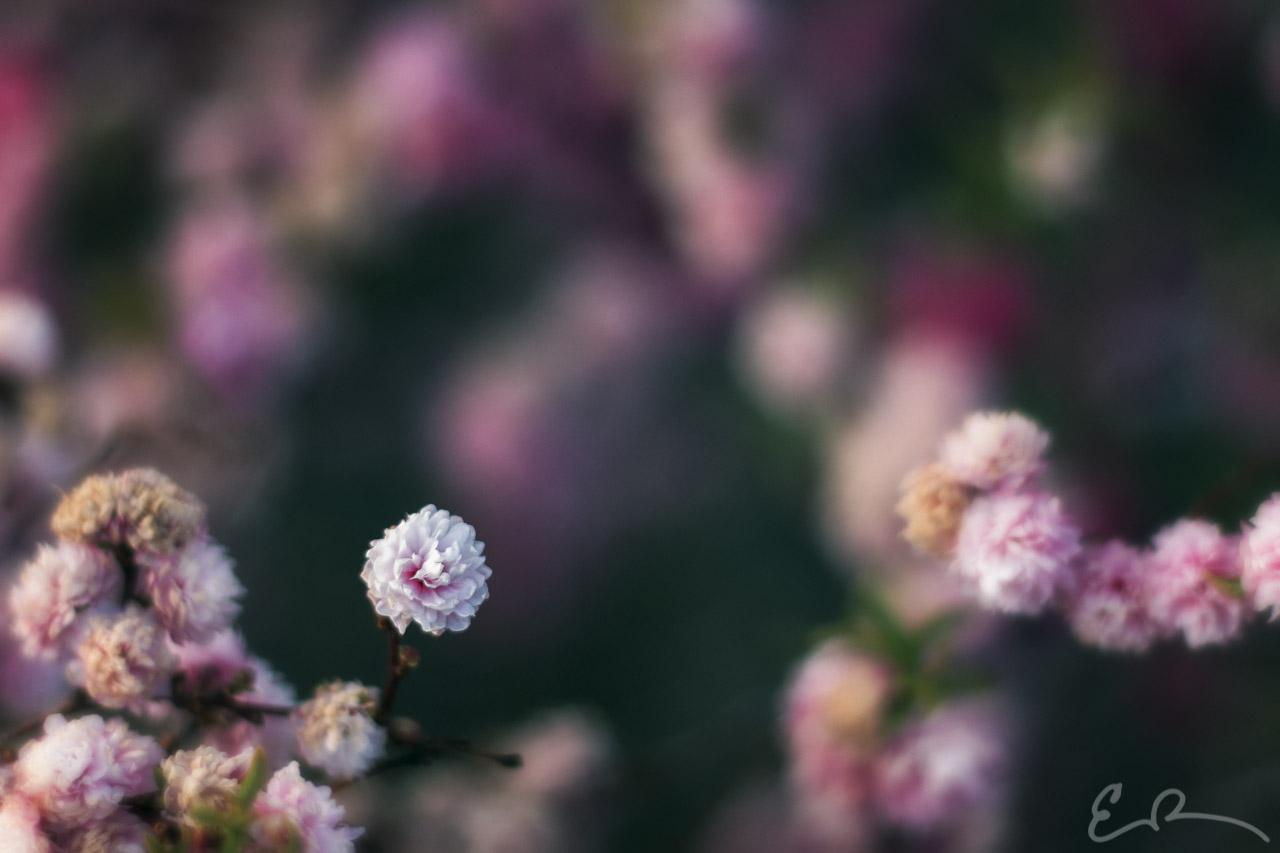 Flowering in Sparks I